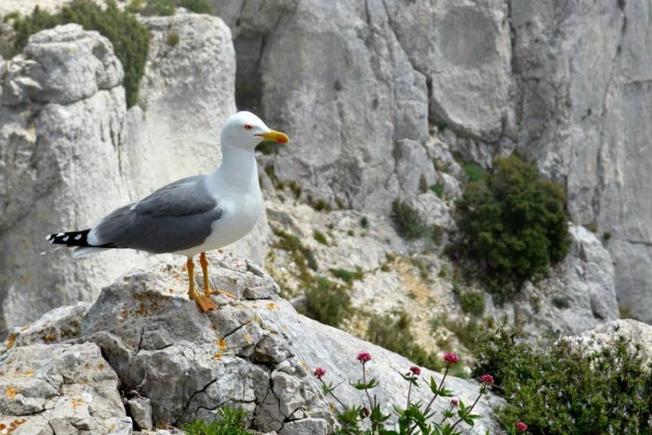 Pinèdes et littoraux, découverte naturaliste du parc national des Calanques